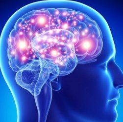 human-brain-1132x670